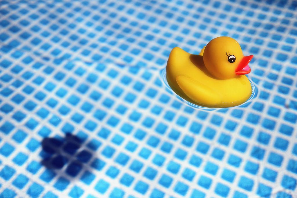 Paperelle gialle da bagno mm immagine - Paperelle da bagno ...